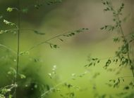 ds1_5466-hellumaskaus-saett-bearb-8