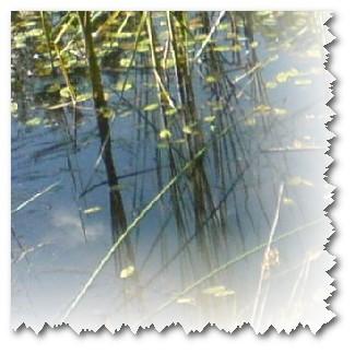 Bei den Seen im Wald