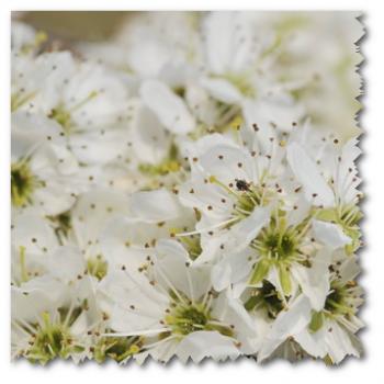 Frühling im Würmtal